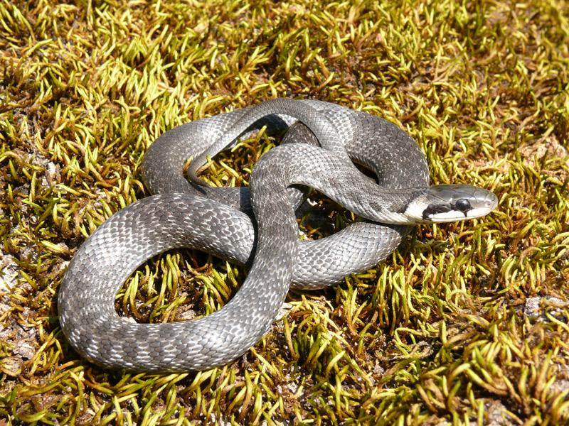отели ядовитые змеи обитающие в краснодарском крае посуточно Ростове-на-Дону