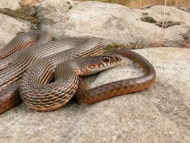 облегающего термобелья, виды змей в дагестане модели женского