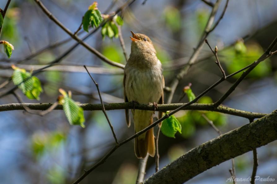 могилу фото какие птицы поют вечером в лесу система пво остается
