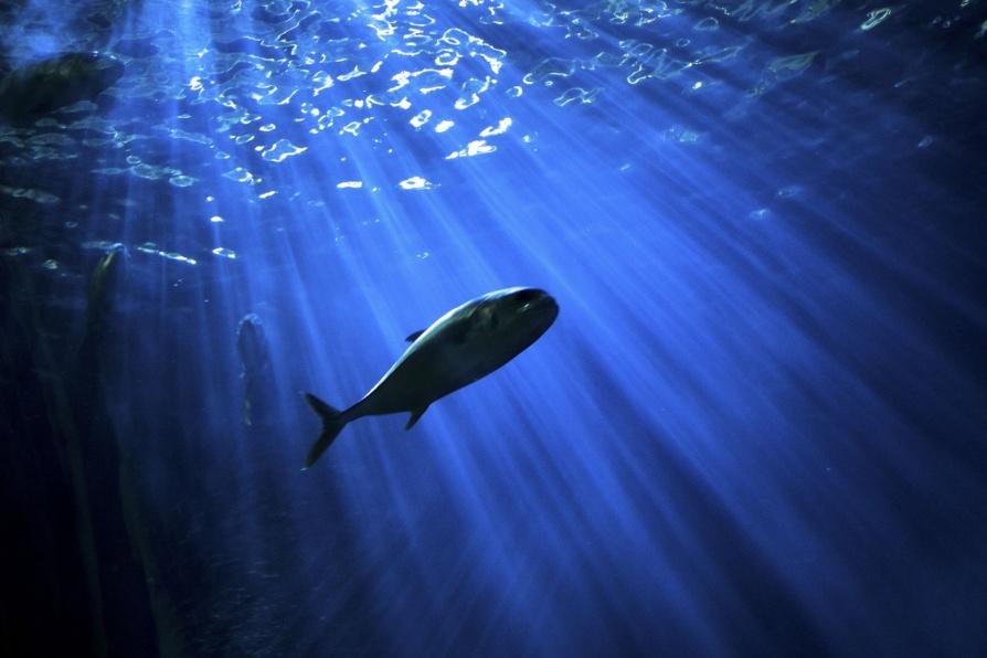 растворимость кислорода в океане